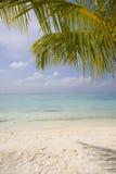Hoja de palma en la playa Fotografía de archivo libre de regalías