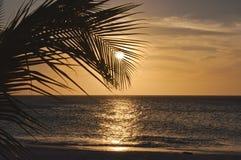 Hoja de palma en la puesta del sol Fotos de archivo libres de regalías