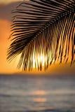 Hoja de palma en la puesta del sol. Fotografía de archivo libre de regalías