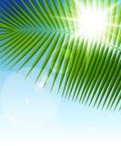 Hoja de palma en vigas del cielo azul y del sol libre illustration