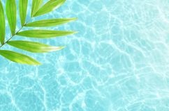 Hoja de palma hermosa del verde de la naturaleza en el mar tropical Fondo del verano Vacaciones de verano concepto del recorrido fotografía de archivo libre de regalías