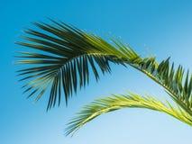 Hoja de palma modelada en fondo del cielo azul Fotos de archivo