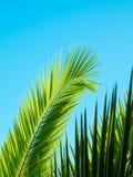 Hoja de palma modelada en fondo del cielo azul Imagenes de archivo