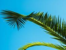 Hoja de palma modelada en fondo del cielo azul Imágenes de archivo libres de regalías