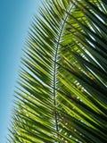 Hoja de palma modelada en fondo del cielo azul Fotos de archivo libres de regalías