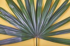 Hoja de palma tropical en fondo amarillo en colores pastel foto de archivo