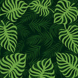 Hoja de palma tropical 10eps del marco de la frontera Fotografía de archivo libre de regalías