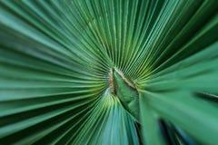 Hoja de palma verde Imagenes de archivo