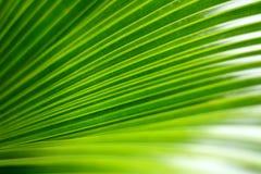 Hoja de palma verde fotos de archivo