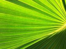 Hoja de palma verde Fotografía de archivo libre de regalías