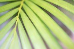 Hoja de palma verde abstracta imagen de archivo
