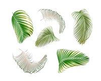 Hoja de palma verde aislada en el blanco para el fondo del verano fotos de archivo