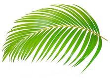 Hoja de palma verde aislada en el fondo blanco con la trayectoria de recortes imagen de archivo