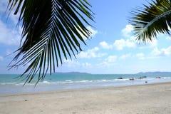 Hoja de palma y el mar Fotos de archivo libres de regalías
