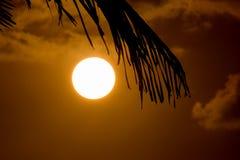 Hoja de palma y puesta del sol Fotografía de archivo libre de regalías