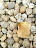 Hoja de piedra y seca Foto de archivo libre de regalías
