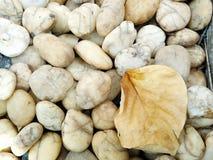 Hoja de piedra y seca Fondos y texturas Fotografía de archivo libre de regalías