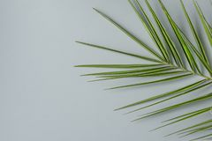 Hoja de punta de la palmera en Grey Stone Background Estilo moderno minimalista Modelo botánico del follaje Modelo del cartel Fotos de archivo libres de regalías