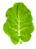Hoja de un bróculi Fotografía de archivo