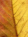 Hoja de un cierre de la planta para arriba Foto de archivo libre de regalías