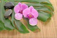 Hoja de un monstera, de una orquídea, de una vela y de piedras imágenes de archivo libres de regalías
