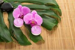 Hoja de un monstera, de una orquídea, de una vela y de piedras imagen de archivo