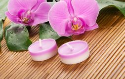 Hoja de un monstera, orquídea, vela imagen de archivo libre de regalías
