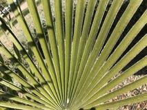Hoja de un palmtree Fotos de archivo