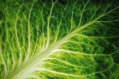 Hoja de una ensalada verde fresca Imagen de archivo libre de regalías
