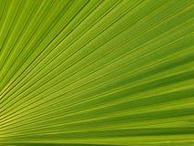 Hoja de una palmera Foto de archivo libre de regalías