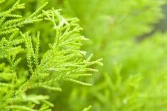 Hoja de una planta Foto de archivo