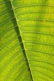 Hoja de una planta Foto de archivo libre de regalías