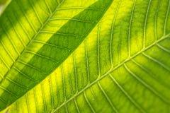 Hoja de una planta Imagen de archivo libre de regalías