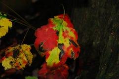 Hoja del árbol en el fondo oscuro 3 Foto de archivo