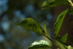 Hoja del árbol en el jardín Foto de archivo
