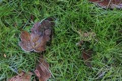 Hoja del árbol en una hierba verde Imagen de archivo