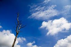 Hoja del árbol hacia fuera en el cielo Fotos de archivo libres de regalías