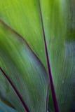 Hoja del árbol un fondo Fotos de archivo