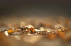 Hoja del abedul de Brown en otoño temprano Fotos de archivo