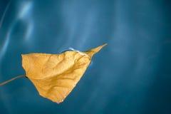 Hoja del abedul del otoño en el agua Foto de archivo libre de regalías