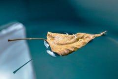 Hoja del abedul del otoño en el agua Imágenes de archivo libres de regalías