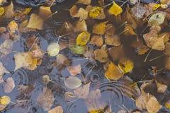 Hoja del abedul del otoño en el agua Fotos de archivo