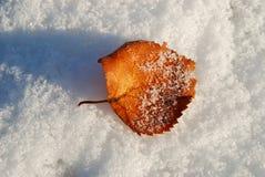 Hoja del abedul en una nieve. Foto de archivo