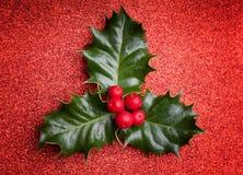 Hoja del acebo de la Navidad con las bayas rojas Imagenes de archivo