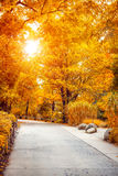 Hoja del amarillo de la sol del parque del otoño en el árbol Fotos de archivo libres de regalías