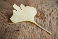 Hoja del automnal del biloba del Ginkgo Imagenes de archivo