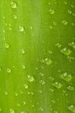 Hoja del bambú Fotografía de archivo libre de regalías