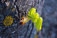 hoja del brote del árbol Fotografía de archivo libre de regalías