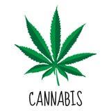 Hoja del cáñamo Hierba de la marijuana Planta medicinal Ilustración del vector ilustración del vector