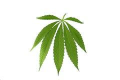 Hoja del cáñamo, marijuana aislada Fotografía de archivo libre de regalías